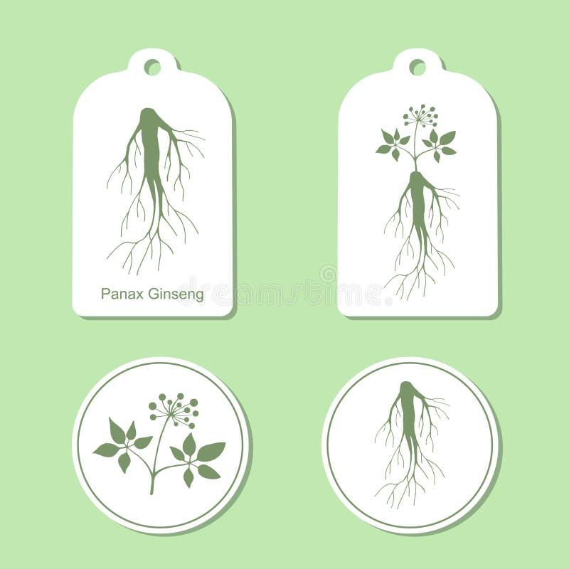 Schattenbild von Panax-Ginseng mit Blättern und Wurzel Auch im corel abgehobenen Betrag Gesundheits-und Natur-Satz Tags und Aufkl vektor abbildung