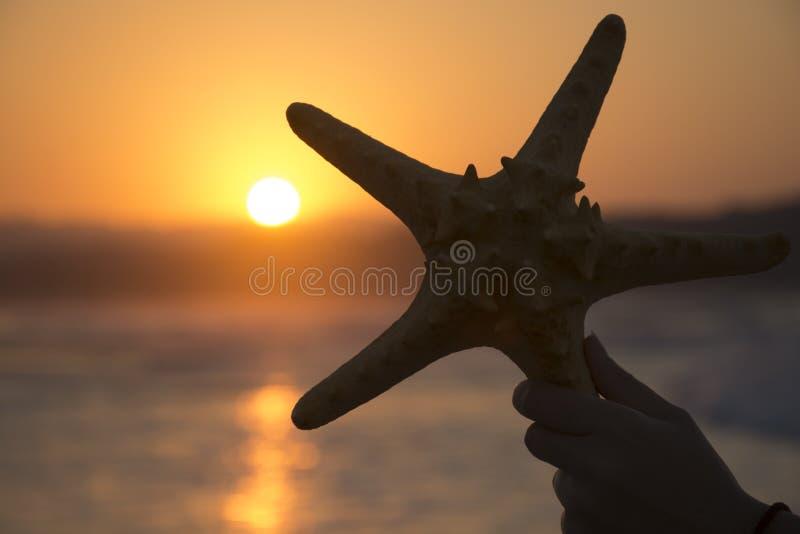 Schattenbild von Starfish auf Sonnenunterganghintergrund Romantischer Hintergrund des Sommers lizenzfreies stockbild