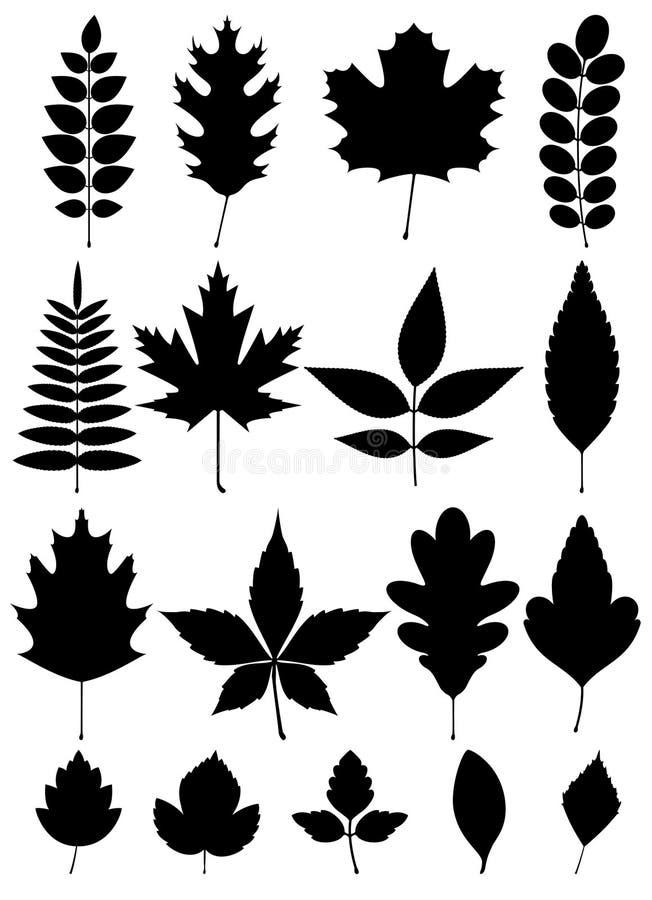 Schattenbild von verschiedenen Blättern lizenzfreie stockfotografie
