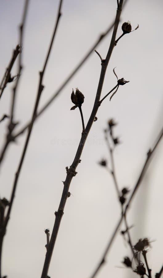 Schattenbild von Zweigen mit seedpods am späten Nachmittag im Herbst stockfoto