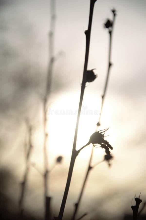 Schattenbild von Zweigen mit seedpods am späten Nachmittag im Herbst lizenzfreies stockfoto