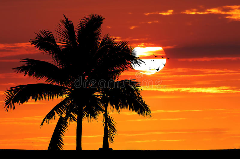 Schattenbildbaum über goldenem Sonnenuntergang lizenzfreies stockfoto
