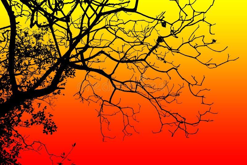 Schattenbildbaum lizenzfreie stockfotos