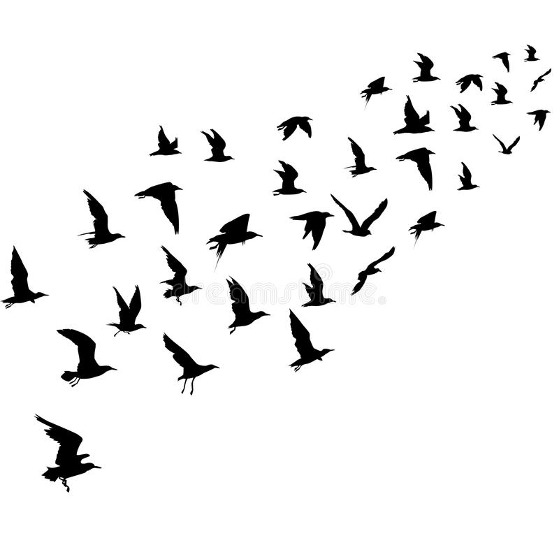 Schattenbilder der Flugwesenvögel lizenzfreie abbildung