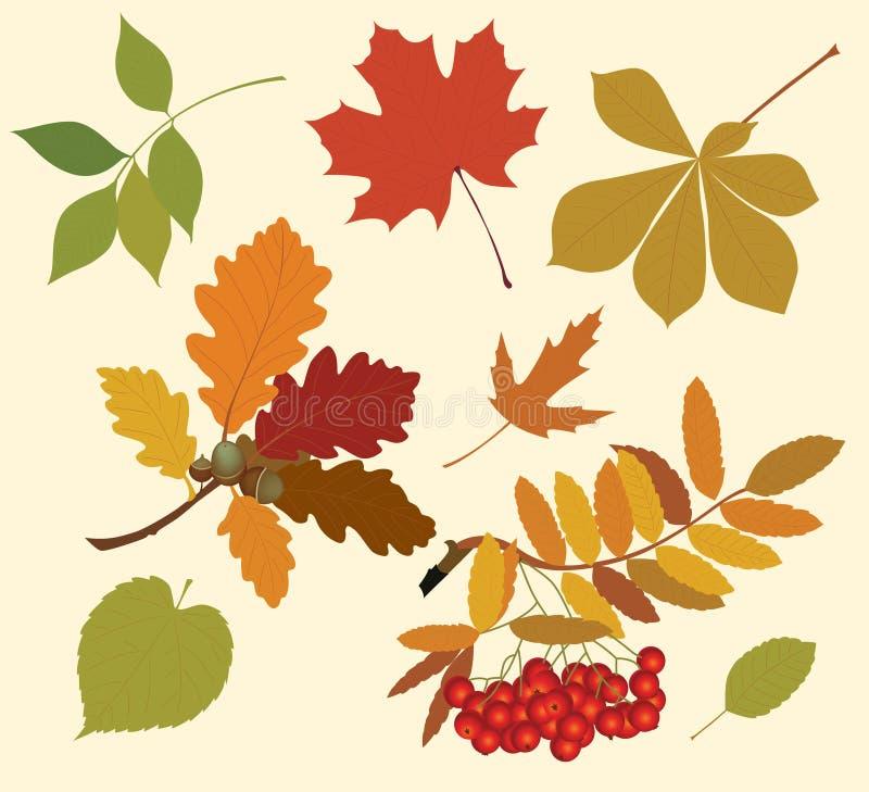 Schattenbilder der Herbstblätter. vektor abbildung