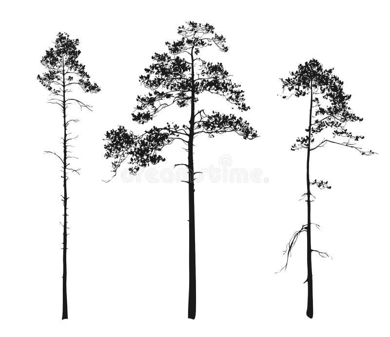 Schattenbilder von Bäumen. Kiefer lizenzfreie abbildung