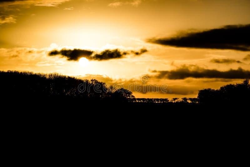 Schattenbilder von Büschen und von Bäumen auf dem Horizont lizenzfreie stockfotos