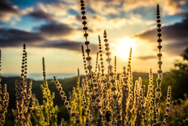 Schattenbilder von Feldanlagen gegen den blauen Himmel und die dunklen Wolken bei Sonnenuntergang lizenzfreies stockfoto