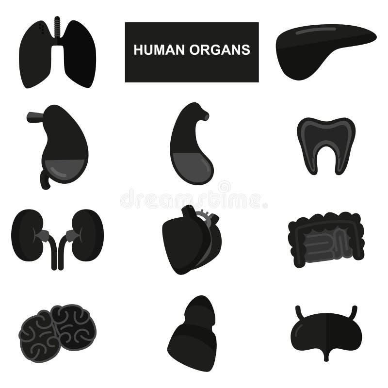 Schattenbilder von menschlichen Organen auf weißem Hintergrund lizenzfreie abbildung