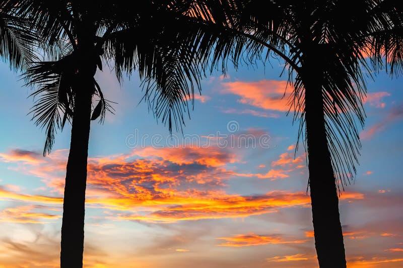 Schattenbilder von Palmen auf dem Hintergrund einer schönen Ozeanlandschaft bei Sonnenuntergang mit einer Welle auf dem Ufer und  lizenzfreie stockfotos