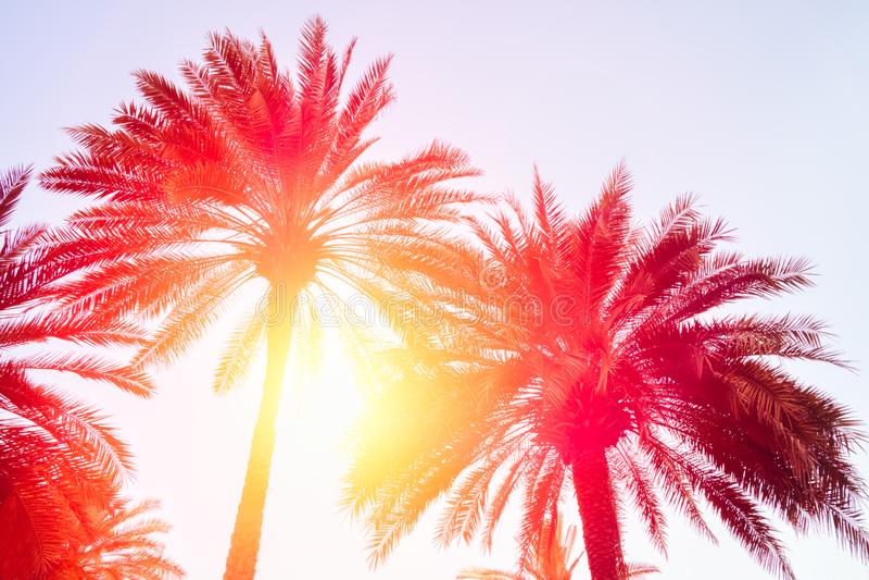 Schattenbilder von Palmen gegen den Himmel während eines tropischen Sonnenuntergangs stockfotografie