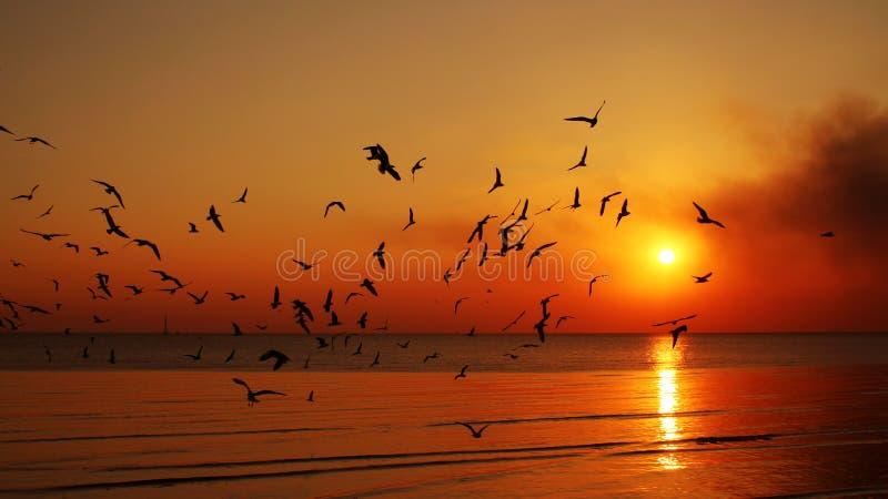 Schattenbildfliegenvögel stockfotos