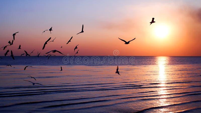 Schattenbildfliegenvogel stockbilder