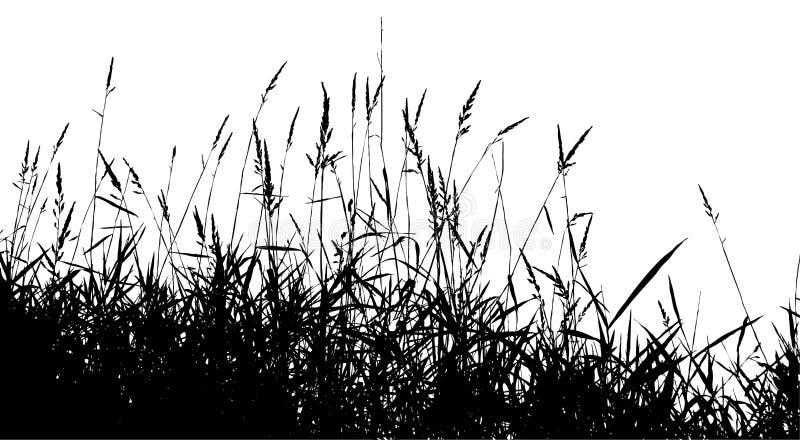 Schattenbildgras stock abbildung