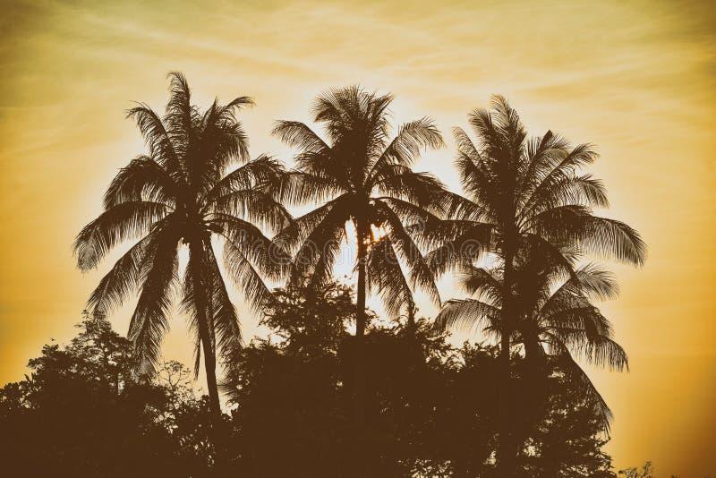SchattenbildPalme mit Weinlesefilterhintergrund lizenzfreies stockbild