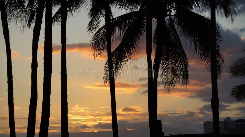 Schattenbildsonnenaufgang mit Palmen stockfoto