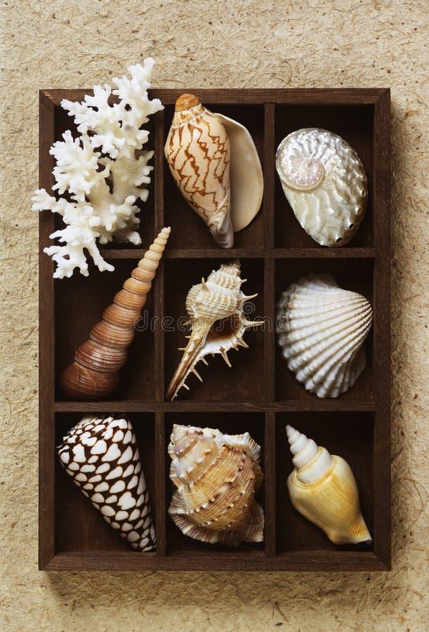 Schattenbox mit Sammlung Seeoberteilen stockbilder