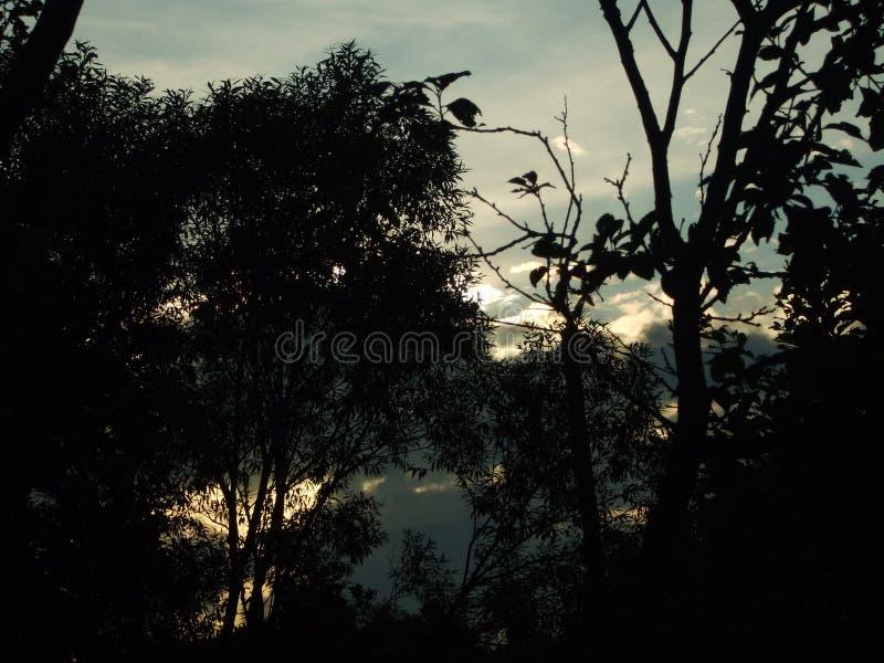 Schattenhafter Sonnenuntergang im Wald lizenzfreie stockfotografie