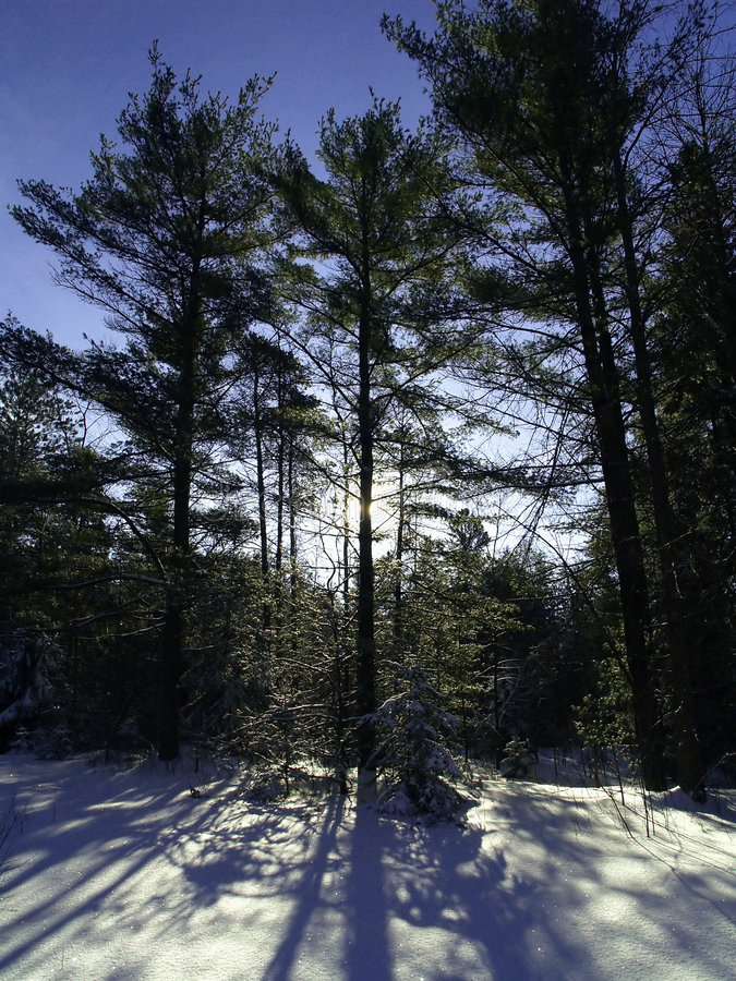 Schattenhaftes Winterholz stockfotografie