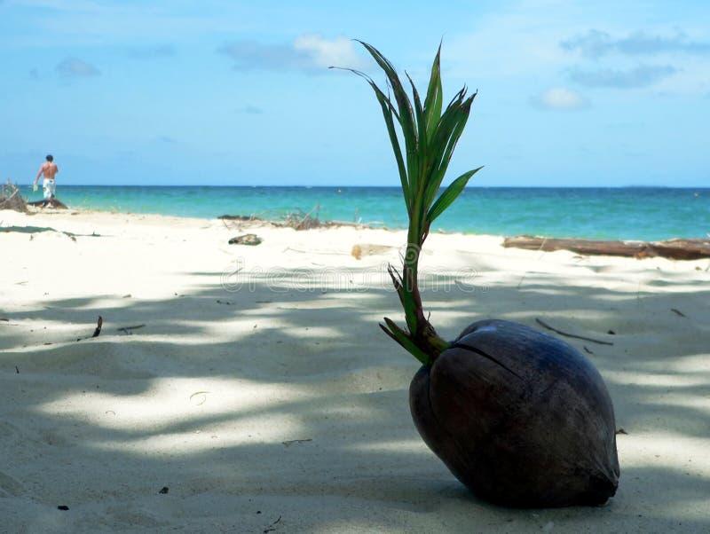 Schattierter korallenroter Strand-Kokosnuss SE Asien lizenzfreie stockfotografie