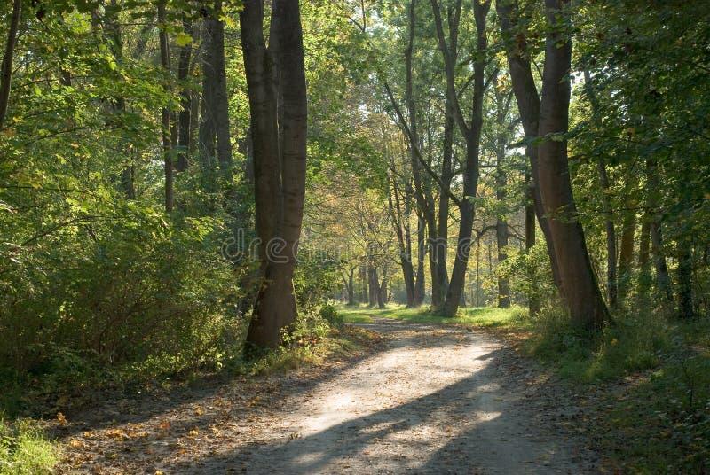 Schattiger Weg im frühen Herbst lizenzfreie stockfotos
