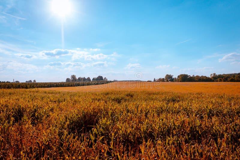 Schauen über den Maisfeldern an einem schönen Herbsttag in Michigan lizenzfreie stockbilder