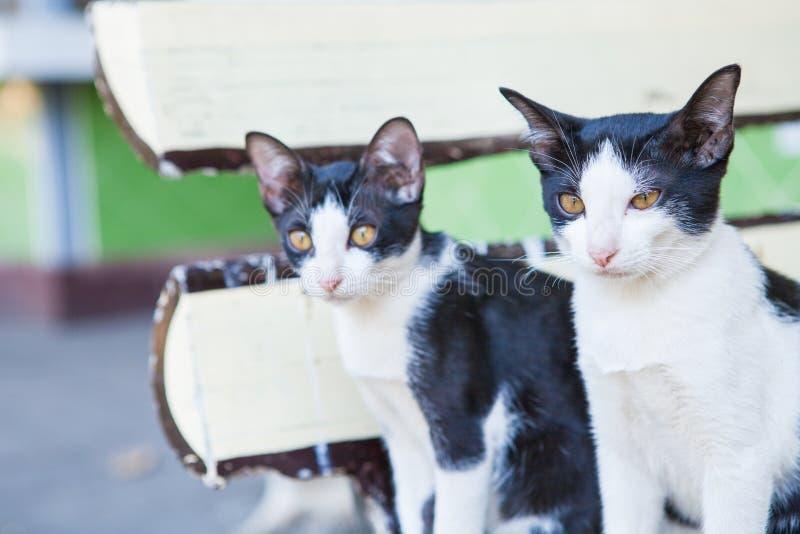 Schauen mit zwei Schwarzweiss-Katzen lizenzfreie stockfotografie