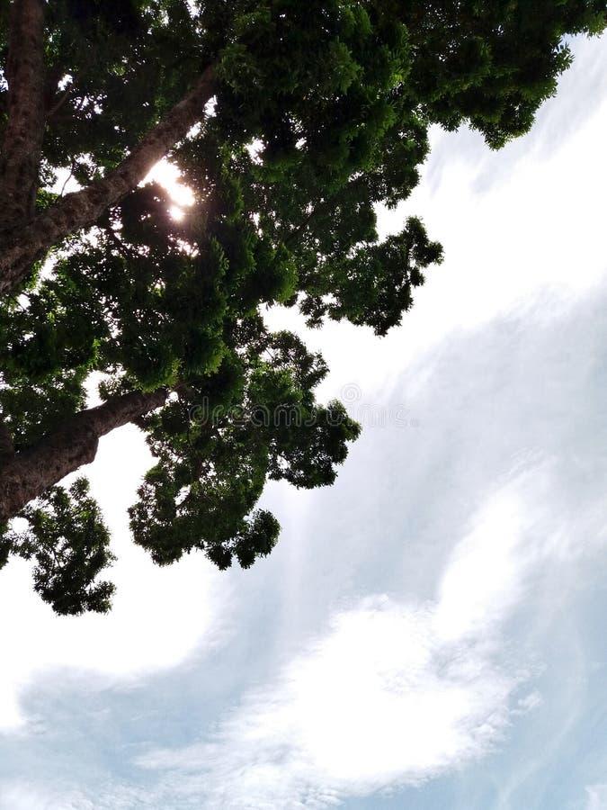 Schauen Sie oben zum Himmel lizenzfreie stockfotos
