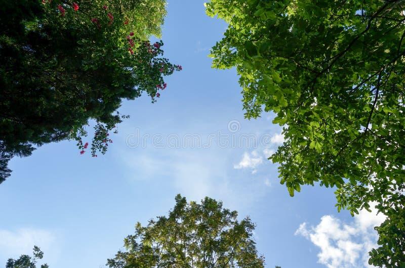 Schauen Sie oben zum Himmel und zu den Bäumen stockfotos