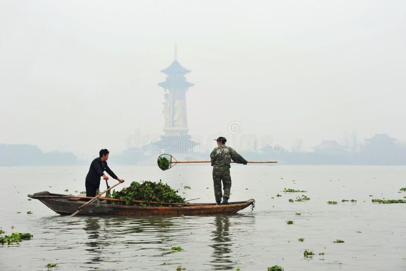 Schaufelnde Wasserhyazinthe in China lizenzfreies stockfoto