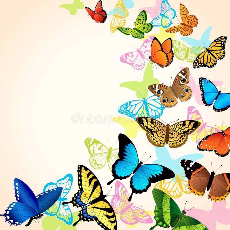 Scheda della farfalla illustrazione vettoriale