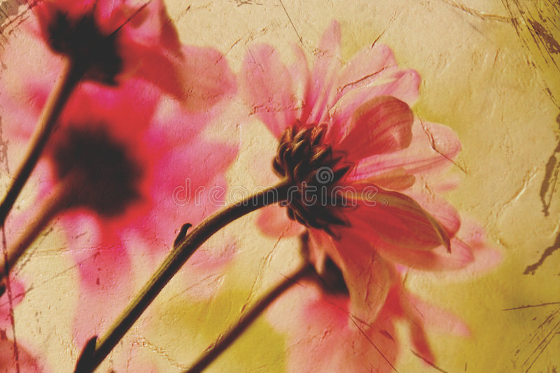 Scheda floreale dell'annata fotografia stock libera da diritti