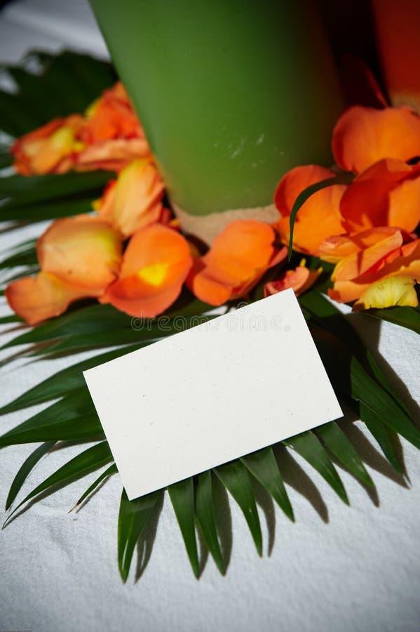 Scheda tropicale in bianco del posto immagine stock