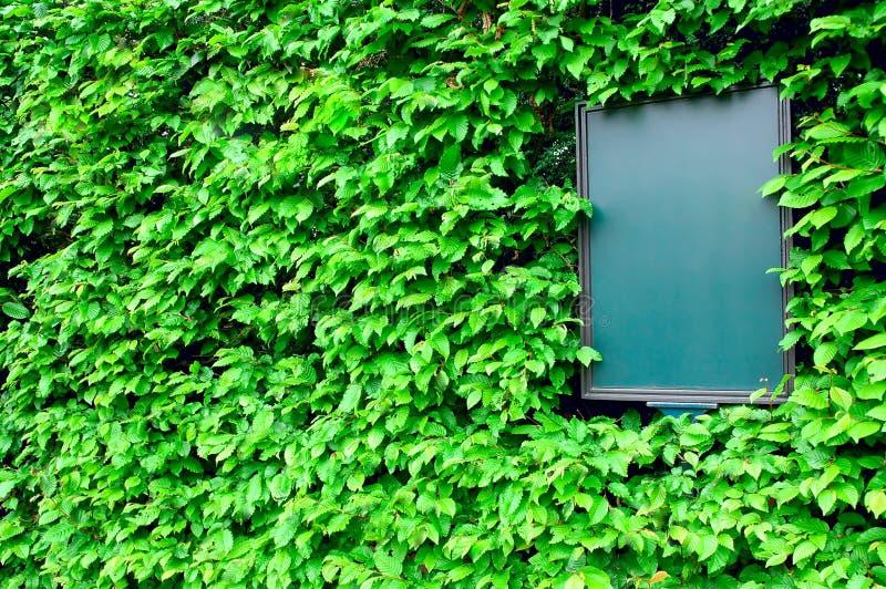 Scheda vuota circondata dai fogli dell'edera, vista obliqua fotografia stock libera da diritti
