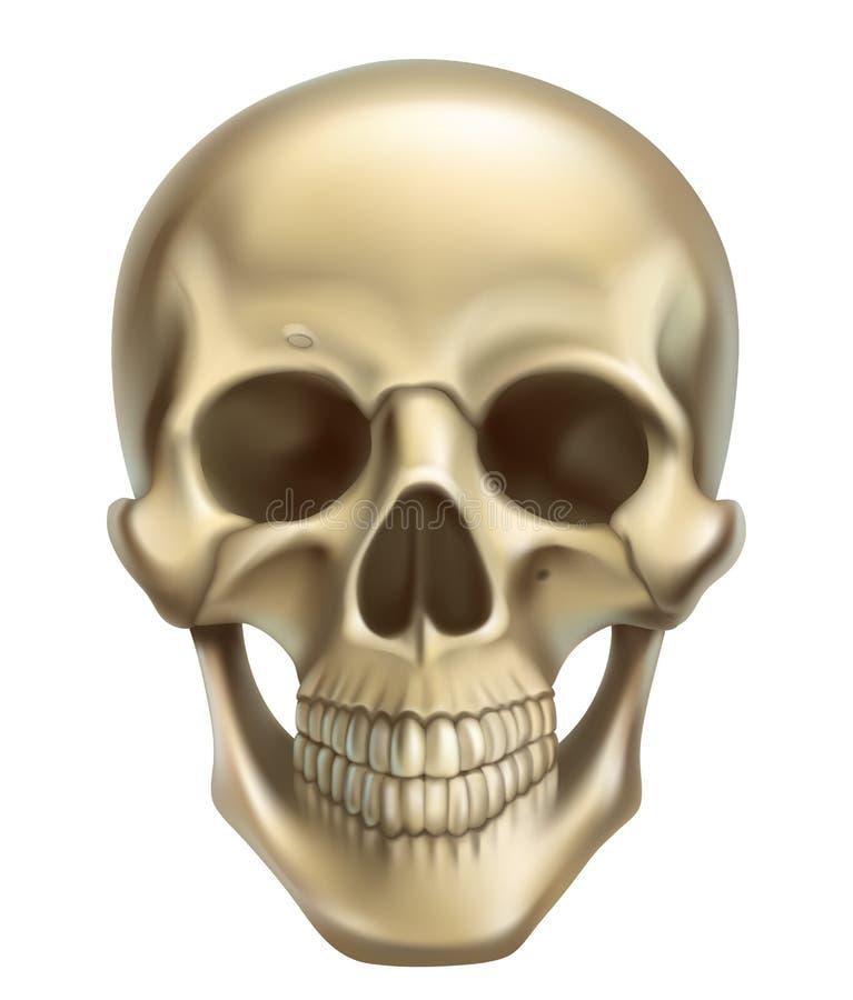 Schedel 3d vectorpictogram vector illustratie