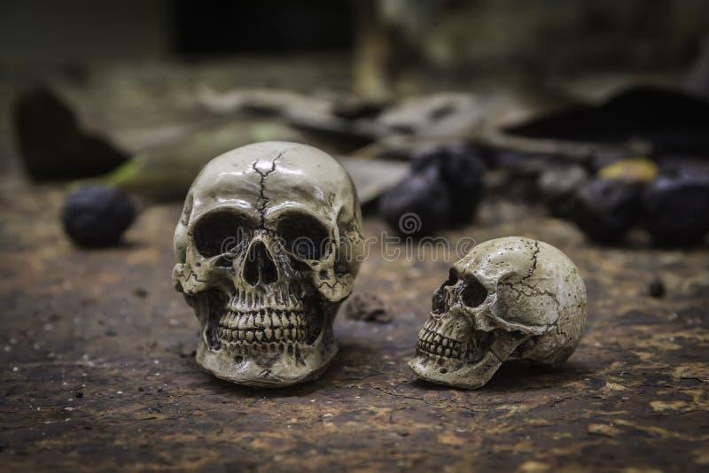Schedel of skelet van menselijke fotografie royalty-vrije stock foto's