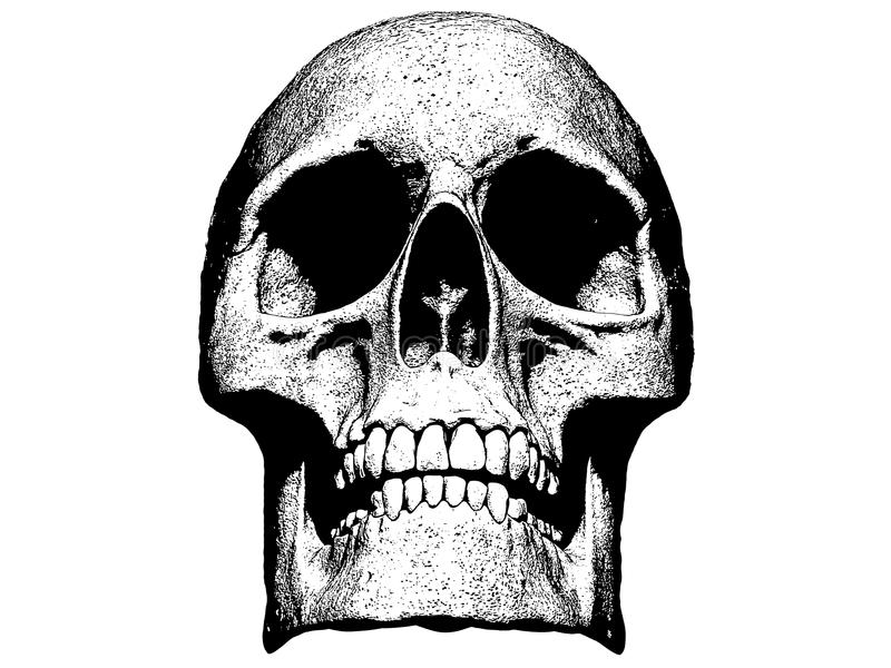 Schedel in witte 3d illustratie wordt geïsoleerd die als achtergrond vector illustratie