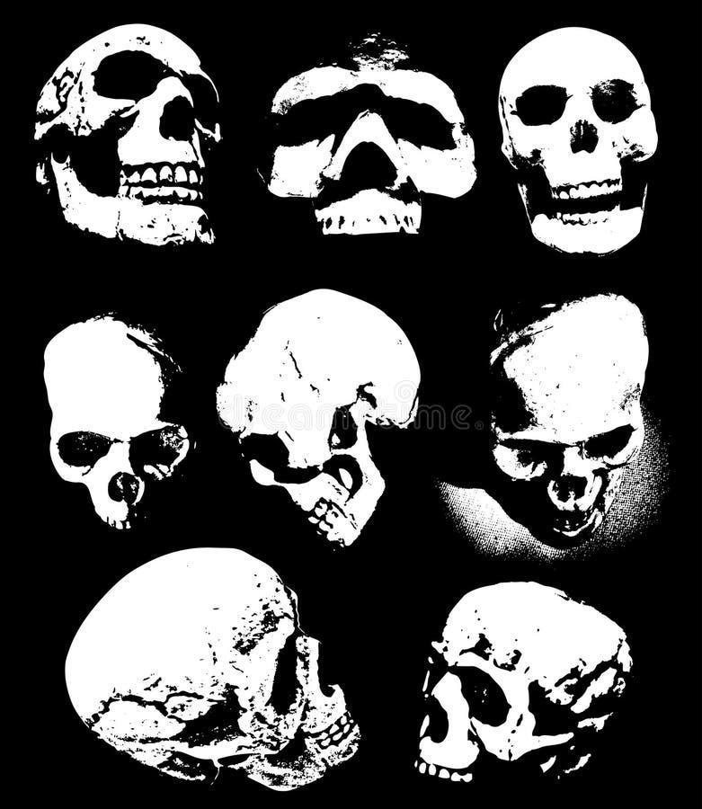 schedels stock illustratie
