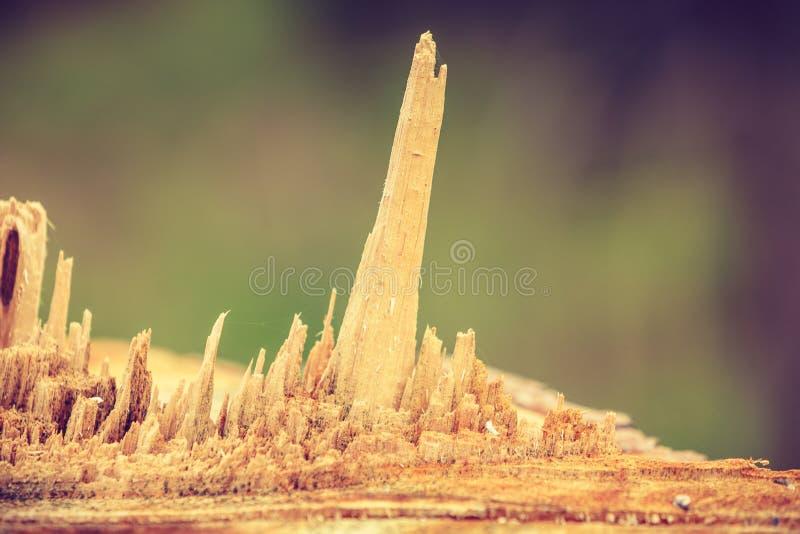 Scheggia di legno che sporge dal legno immagine stock libera da diritti