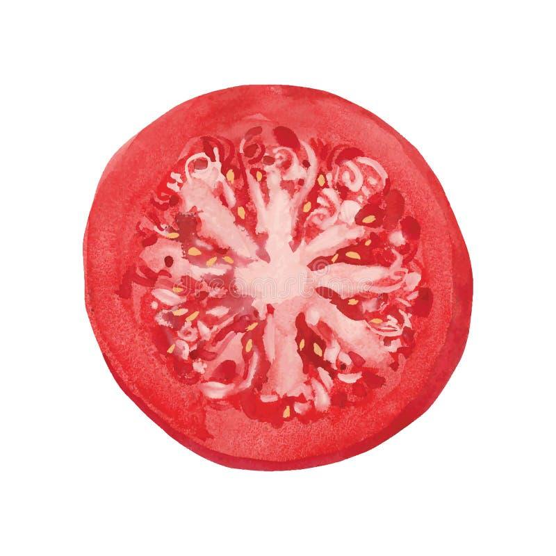Scheibe der Tomate vektor abbildung