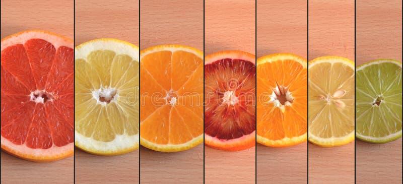 Scheiben von sieben unterschiedlicher Zitrusfruchtvielzahl vereinbarten durch Größe stockfotos