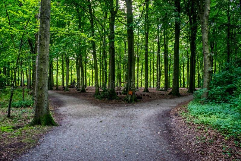 Scheiding van een weg in Haagse Bos, bos in Den Haag stock afbeelding
