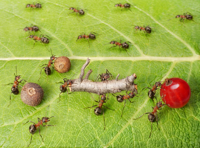 Scheidingslijn en ladingsverkeer in mierenhoop, groepswerk royalty-vrije stock fotografie