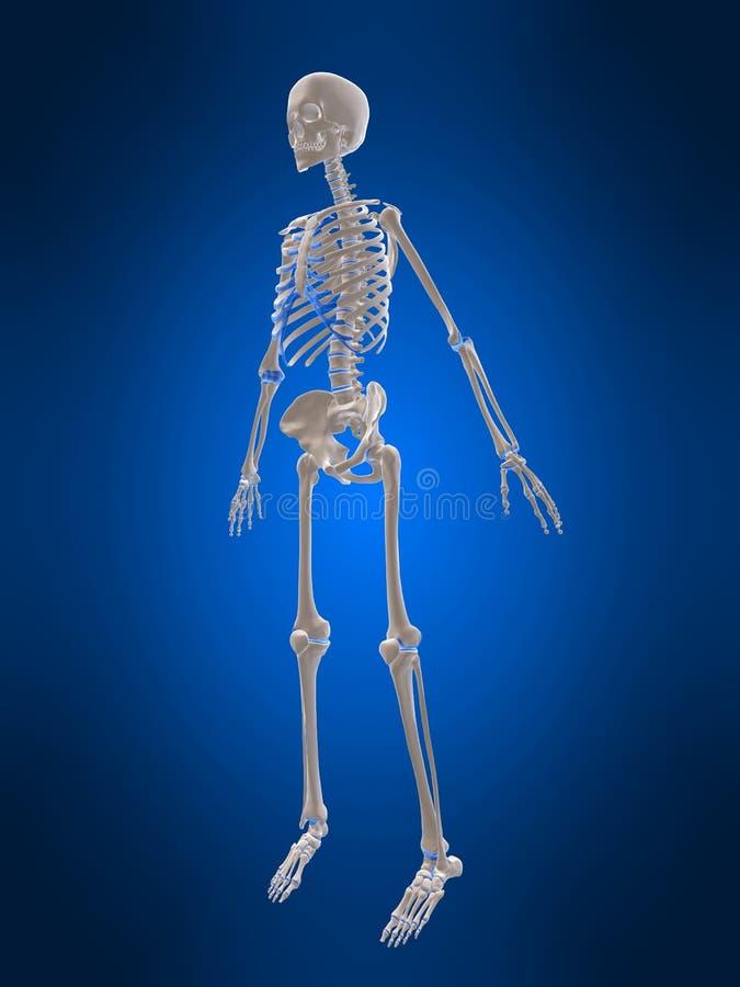 scheletro 3d illustrazione di stock