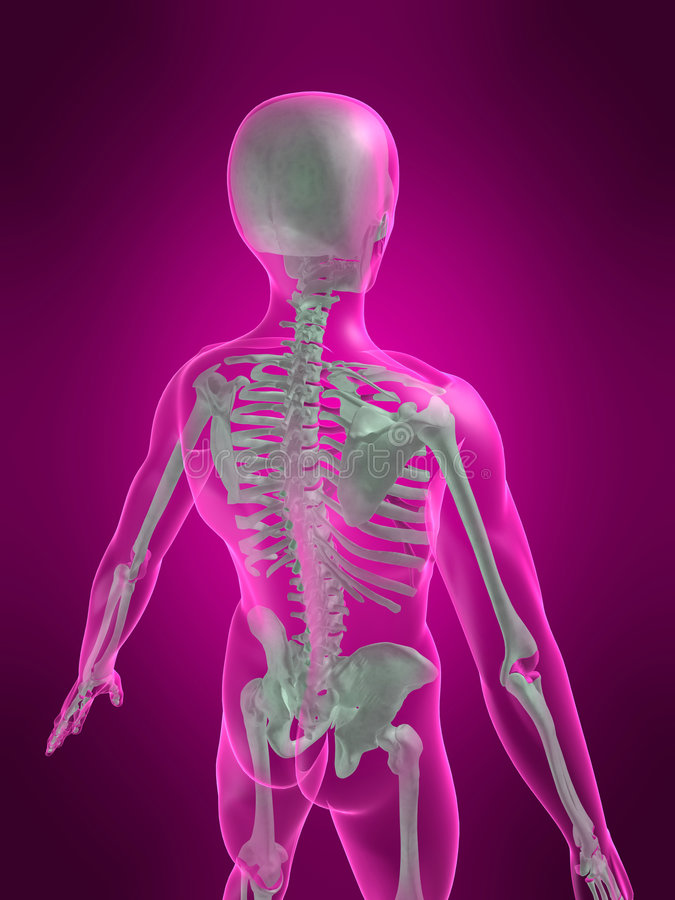 scheletro 3d royalty illustrazione gratis