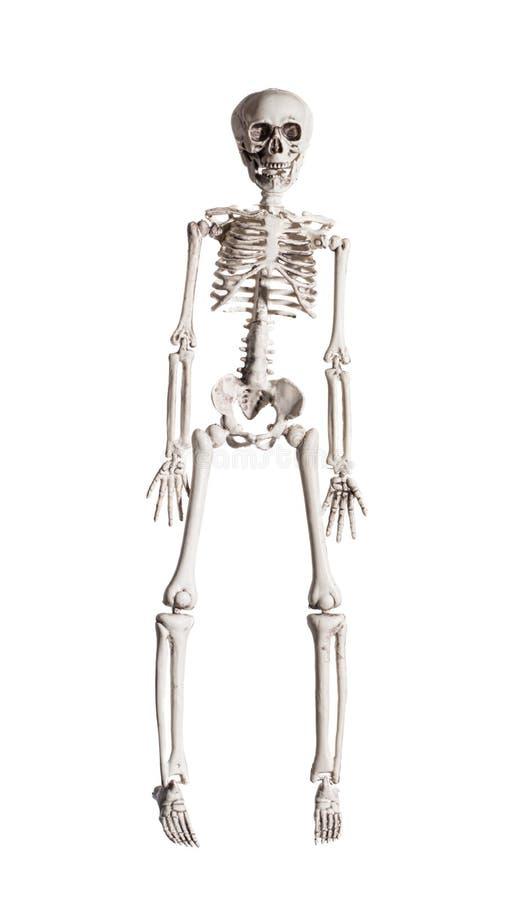 scheletro fotografia stock libera da diritti