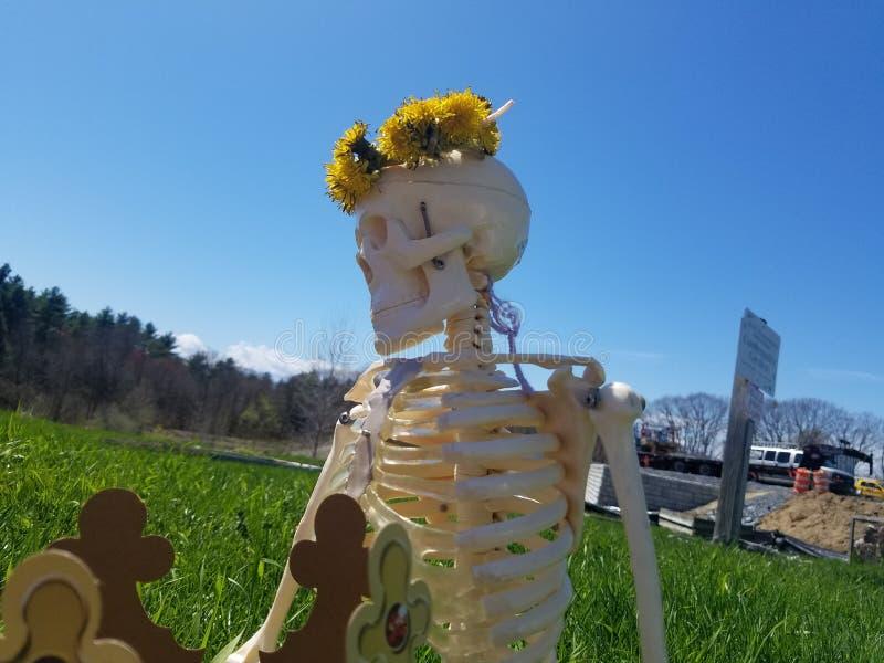 Scheletro di tvoja del je di Kruna nel parco con una corona del fiore fotografia stock libera da diritti