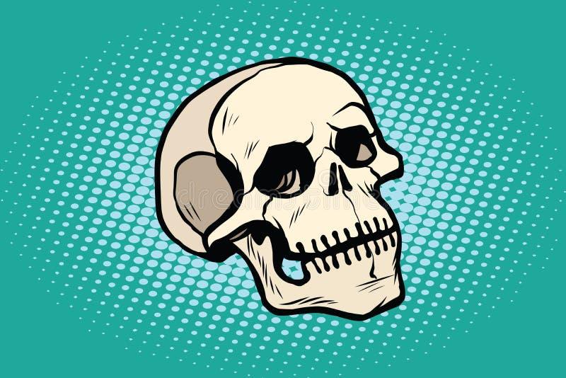 Scheletro umano della testa del cranio illustrazione di stock