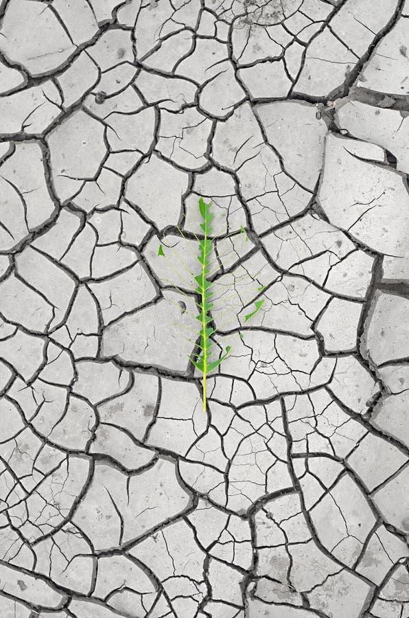 Scheletro verde del foglio immagini stock