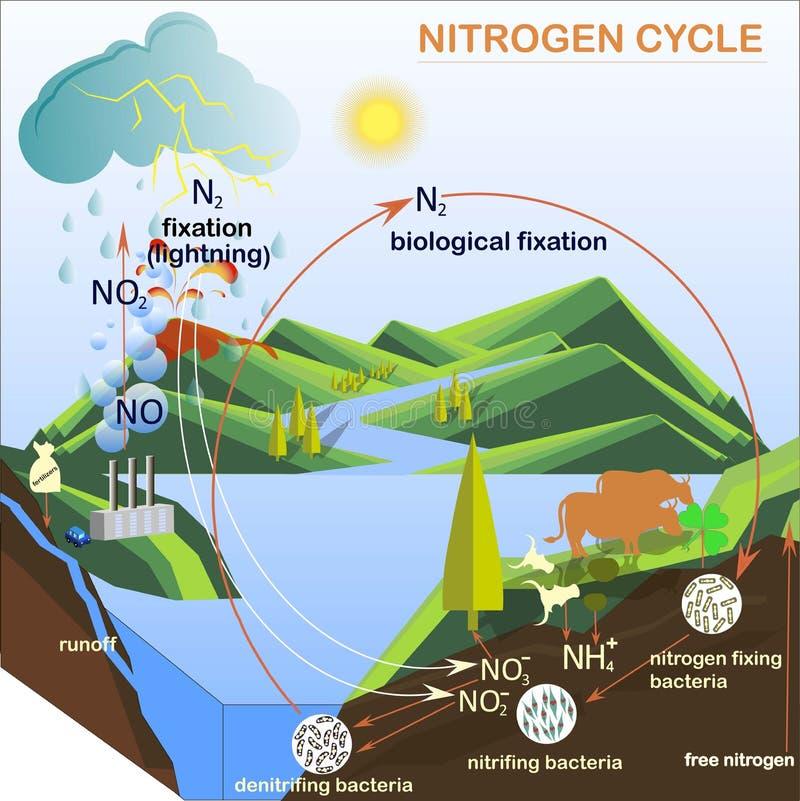 Schema dell'illustrazione del ciclo dell'azoto illustrazione vettoriale